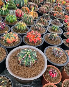 Wonderful Cactuses And Desert Plants Photography By Wachirapol Deeprom Growing Succulents, Cacti And Succulents, Cactus Plants, Cactus Art, Cactus Flower, Adventure Photography, Wildlife Photography, Local Photographers, Unusual Plants