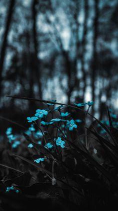 Download 1350x2400 flowers, blue, field, blur wallpaper