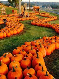 Love this time of year - 25 Dies und das Fundstücke - Travel Pumpkin Patch Farm, Pumpkin Field, Pumpkin Patches, Fun Fall Activities, Fall Pictures, Pumpkin Pictures, Autumn Scenes, Autumn Lights, Autumn Aesthetic