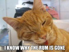 Hangover Kat