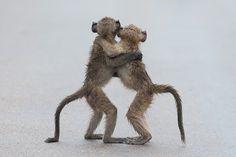 Dit zijn de grappigste dierenfoto's van het voorbije jaar - De Standaard