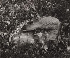 Martin Martinček: Jelenička:1965 - 1970 Fine Art Photo, Photo Art, Creature Comforts, Creatures, Projects, Photos, Photography, Animals, Author