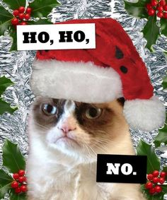 Christmas vs Grumpy Cat