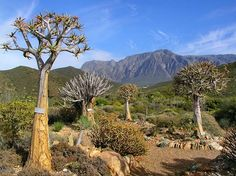 Karoo South African Flowers, African Love, The Beautiful Country, Beautiful Places, Clifton Beach, Country Landscaping, Out Of Africa, African Countries, Beaches In The World
