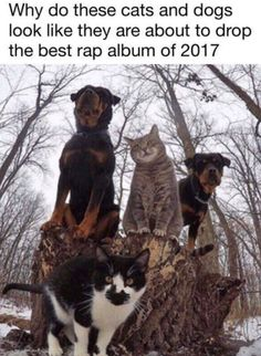 20 Pet Memes That Make You Laugh: Mood Changers - Gifts and More - Funny Animal Memes - Katzen - Lustig Cute Animal Memes, Cute Funny Animals, Funny Animal Pictures, Cute Baby Animals, Funny Cute, Hilarious Pictures, Animal Humour, Funniest Animals, Animal Fun