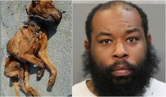 Pet dog starved until it DIED because his owner was too lazy to feed him! Act Now!