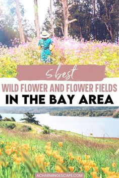 5 best wildflower and flower fields in the Bay Area. In the spring season, the rolling hills and ocean cliffs in Northern California and the Bay Area turn shades of yellow, orange and pink with wildflowers. It is a beautiful time of the season to go on hikes and check out flower fields in the Bay Area. Check out my favorite wildflower and flower fields in the SF Bay Area ranging from yellow mustards to pink and orange poppies! California Travel | Bay Area Flower Fields | Visit California, California Travel, Northern California, Sonoma Wine Country, Fun Walk, Romantic Weekend Getaways, Amazing Adventures, Usa Travel, Plan Your Trip