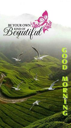 The best Good Morning images collected from all over the web that'll inspire your loved ones & uplift their mood. Good morning images, gifs, wishes, poems, wishes & more! Morning Images In Hindi, Good Morning Beautiful Flowers, Good Morning Beautiful Images, Good Morning Inspiration, Good Morning Images Download, Morning Pictures, Morning Flowers, Night Flowers, Good Morning Wednesday