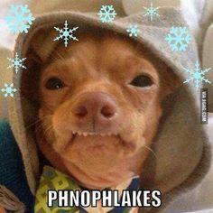 Phteven loves phnophlakes