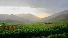 Quinta da Seda - Douro Douro, Vineyard, Outdoor, Silk, Outdoors, Vine Yard, Vineyard Vines, Outdoor Games, The Great Outdoors