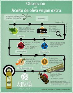 Obtención del aceite de oliva virgen extra - Obtención do aceite de oliva virxe extra
