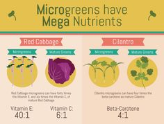 Microgreens: Health Benefits of Microgreens