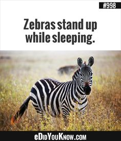 625 Best Animals Images Fun Facts Did You Know Facts Weird Facts