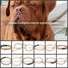 e74af93b9819 Las 23 mejores imágenes de Dogo de Burdeos - Collares para perros ...