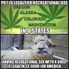 Pot is legal for recreational use in 4 stated. Having recreational sex with a sheep is legal in 13. Good job, America! ih