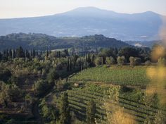 Wine Tasting at Tuscany's Best Wineries - Condé Nast Traveler - Biondi-Santi, Tenuta Il Greppo - Like Barone Ricasoli with Chianti, you can expect to find an excellent bottle of Brunello di Montalcino at Biondi-Santi—it was invented here, after all. Biondi-Santi alone has been producing Brunello continuously since 1888