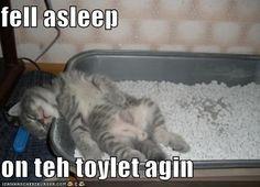 fell asleep..