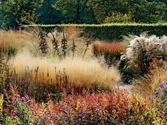 Fluffy plumes of Deschampsia caespitosa grass set off the silhouette of dark late-season Veratrum californicum, a handsome, graphic plant when left to go to seed. (Photo by: Philippe Perdereau)