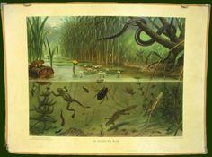 df0965a503a4e6 .schoolplaat. Natuurfoto's, Vintage Prints, Vintage Posters, Kinderen  Spelen, Ouderwetse School