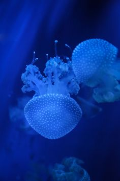 #Jellyfish #Photography #Fish