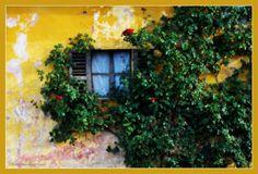 ...nei pressi del castello di Mazzè (To) il muro di una villa privata, la finestra e la rosa rampicante. #canavese #mazzè #Piemonte #Italy #ilovecanavese