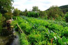 La permaculture, un concept très positif pour l'avenir