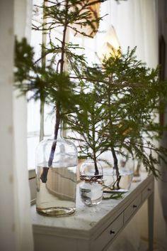 live-greenery-vases