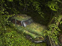 Photographer Peter Lippmann has been traveling the countryside, seeking out vintage abandoned automobiles and creating some haunting, yet stunningly beautiful images. In each photograph the cars, forgotten and parked for years, are overtaken by the surrounding foliage: trees poke through fenders, leaves emerge from old chrome grills and vines make a home out of the machines interior.