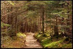 """Visual #Bible #VerseoftheDay: Mountain Trail, Great Smoky Mountains National Park, North Carolina and John 15:6-7. """"If you abide in Me, and My words abide in you, ask whatever you wish…"""" CLICK THE PHOTO for the complete passage. http://visualverse.thecreationspeaks.com/abide-in-me/"""