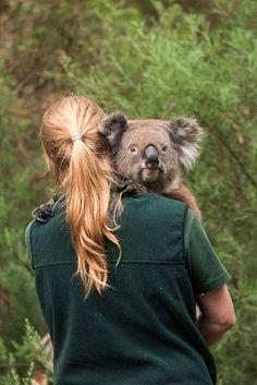 Julie Fletcher Photography | Cleland Wildlife Park, SA Rainforest Habitat, Daintree Rainforest, Dynamic Duos, Wildlife Park, Great Barrier Reef, Wild Things, Australia Travel, Small Groups, Habitats