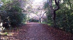 Te Henui walkway early winter