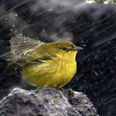 243 Best I Love Rainy Days Images On Pinterest Rainy Days Rain