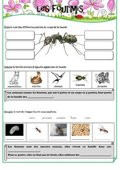 Fiche documentaire - les fourmis (à partir de l'émission c'est pas sorcier) Spring Activities, Activities For Kids, Grade 2 Science, Curriculum, Homeschool, French Worksheets, French Education, Cycle 2, French Classroom