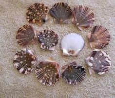 1000 images about shell projects on pinterest shell for Seashell crafts for adults