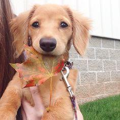 Golden Puppy I bought a New One http://ift.tt/2mep5I4