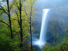Silver Falls State Park, Oregon - Bing Images