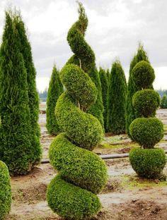 HappyModern.RU   Туя: посадка и уход — зеленые пирамиды живых изгородей и тенистых аллей в нашем саду   http://happymodern.ru