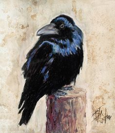 Billie Colson - Latest Raven/Crow, I admit, I'm not sure which....