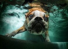 Casteel takes the coolest pictures of underwater dogs!    http://animaltracks.today.msnbc.msn.com/_news/2012/02/14/10404422-b-e-l-l-y-f-l-o-p-amazing-photos-of-underwater-dogs