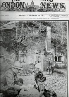 WWI, 1915; French doctor ministers to the wound of a medical helper dog