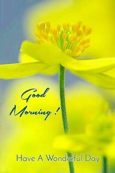 G Morning, Happy Morning, Good Morning Love, Good Morning Greetings, Good Morning Wishes, Good Morning Quotes, Good Morning Images Flowers, Morning Pictures, Morning Pics