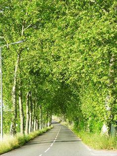 Estrada-árvores, Portugal