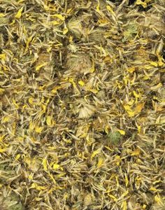How to make arnica gel for bruises and aches, arthritis (as effective as ibprofen gel!), etc.