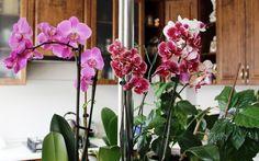 Banánová kôra pre orchidey Floral Wreath, Home And Garden, Wreaths, Beauty, Decor, Tatoo, Plant, Beleza, Decoration