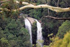 Mt Tamborine, Queensland