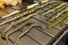 vipers smuggled in a shoe box