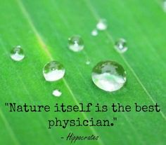 Nature itself is the best physician. Hippocrates greek physician and philosopher Quotographed Green Nature Quotes, Hippocrates Quotes, Manufacturing Business Ideas, Word 16, Medicine Quotes, Vintage Nature Photography, Nature Quotes Adventure, Garden Quotes, Fairy Quotes