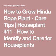 How to Grow Hindu Rope Plant - Care Tips | Houseplant 411 - How to Identify and Care for Houseplants