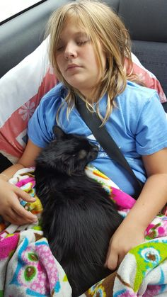 Kitty on lap while on roadtrip