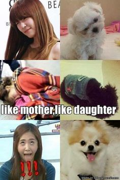 SNSD and their dogs LOL